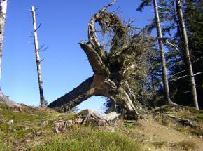 Toter baum im laubwald landschaft